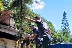 Tannenbaum wird geschlagen.